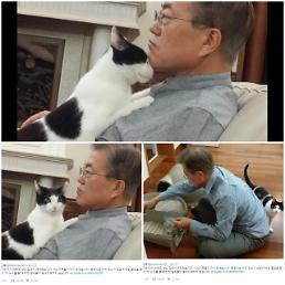 """.小猫咪""""晶晶""""入住青瓦台 成为""""第一猫""""."""
