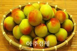 전국 매실 1번지 광양서 6월 3일부터 매실 열매 축제 열려