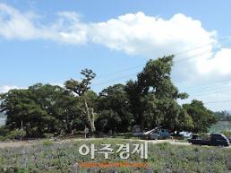 인동장씨 집성촌 신안 반월 당숲 국가산림문화자산 지정