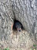 [GLOBAL PHOTO] Furry rescue in Kentucky