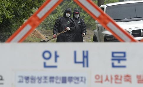 韩政府决定购买扑杀家禽以防禽流感扩散