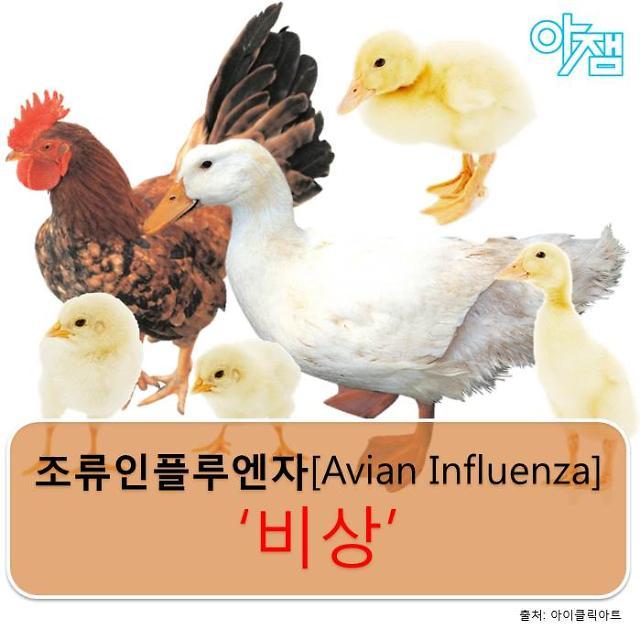 [아잼&건강] 조류인플루엔자(AI) 인체 감염, 신고 기준부터 대상별 맞춤 예방법까지
