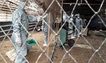 정부, 전국 살아있는 닭·오리 유통·반출 전면 금지