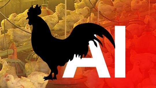 韩政府全面禁止流通活禽 禽流感与干旱致餐桌物价暴涨