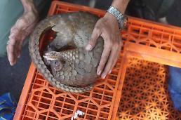 Indonesia Pangolins Smuggler caught