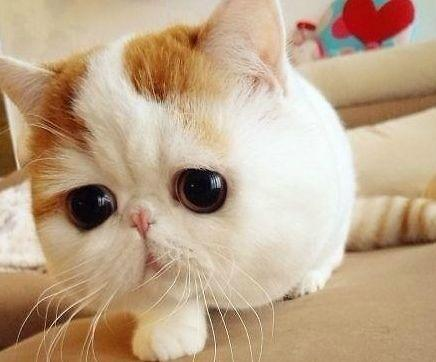 韩爱宠一族成消费主力军 人们更愿在猫咪身上砸钱