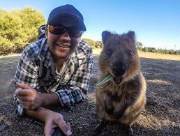 Quokka got smitten with a stranger and it became long-term relationship