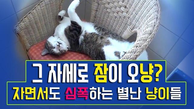 [아잼 이슈]그자세로 잠이 오냥? 자면서도 심폭하는 별난 냥이들