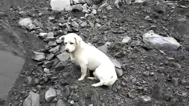 [동영상] 주인 찾아요, 중국 쓰촨 산사태 현장 지키는 강아지