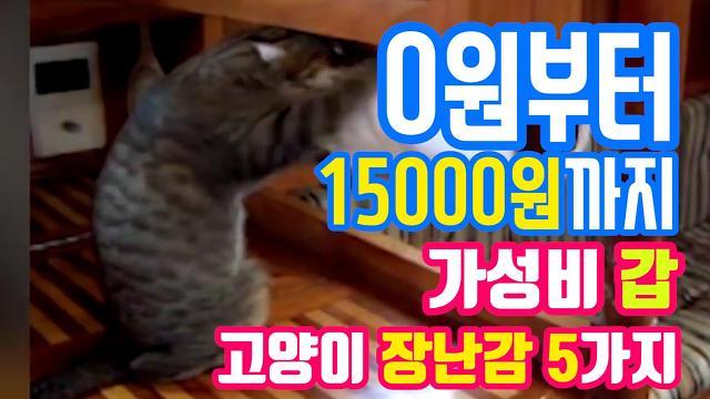 [아잼 이슈]0원부터 15,000원까지, 가성비 갑 고양이 장난감 5가지