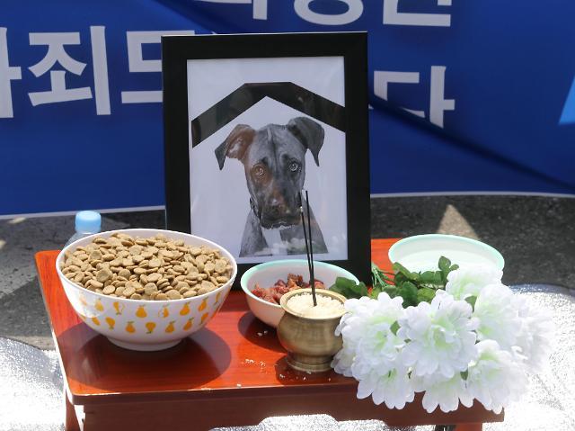 惊!韩国人为宠物狗摆祭桌