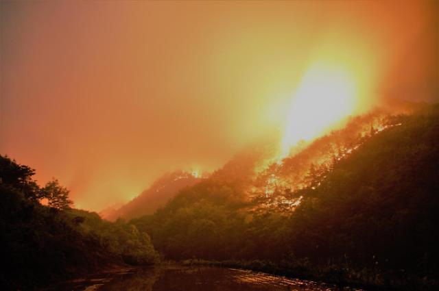 [산림분야 적폐청산]퇴직공무원 성역된 산림청 산하단체, 적폐청산 1순위로