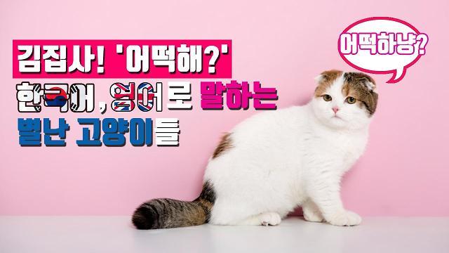 [아잼 이슈] 김집사 어떡해? 한국어, 영어로 말하는 별난 고양이들!