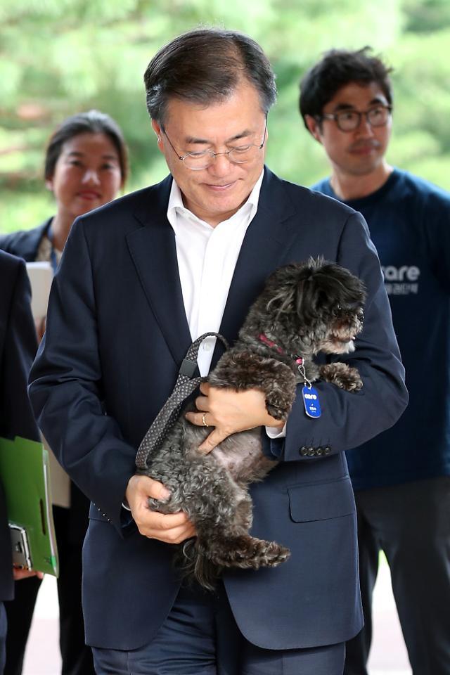유기견 토리, 드디어 문 아빠 품으로