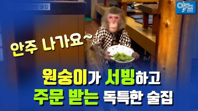 [아잼 이슈]안주 나가요~ 원숭이가 서빙하고 주문 받는 독특한 술집!