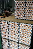 .Health officials blacklist 45 egg farms for insecticide use.
