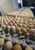 韩扣留和销毁毒鸡蛋700万个