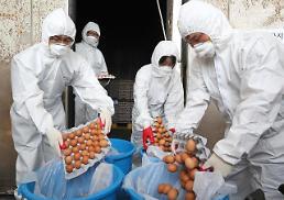 """.韩食品当局称""""毒鸡蛋""""没毒 每天食用2.6个依然身体倍儿棒."""