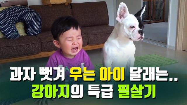 [아잼 이슈]과자 뺏겨 우는 아이 달래는.. 강아지의 특급 필살기