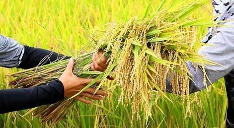 韩国会通过加入《粮食援助公约》 向落后国家提供援助解决粮食过剩