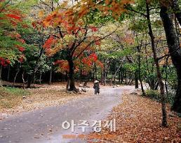 가을날 특별한 외출 생태와 문화가 어우러진 순천 둘러보기