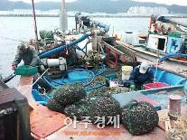 울산 남구, 19일부터 '태화강 바지락 어장' 조업 재개