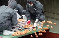 살충제 계란 재발 법으로 차단된다