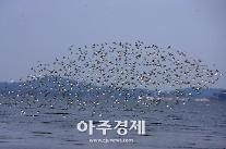 서천군,  '유부도 갯벌 세계자연유산 등재' 박차