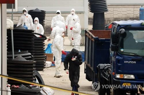 韩全罗南道禽流感集中爆发 45天内鸭子饲养量减少一半