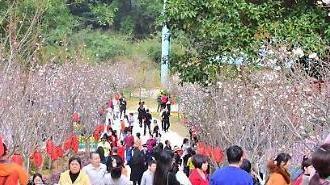 모바일 새뱃돈과 해외여행…달라진 중국의 춘제 풍속