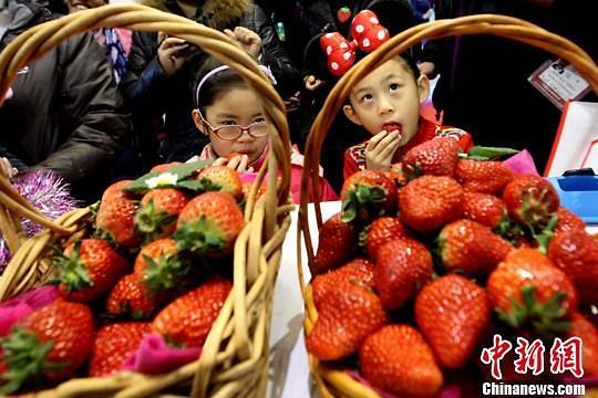 생산가치 10조원 중국 딸기, 브랜드화 추진