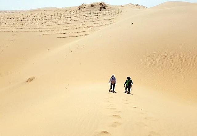 韩国拟在中国库布齐沙漠种40万棵树苗