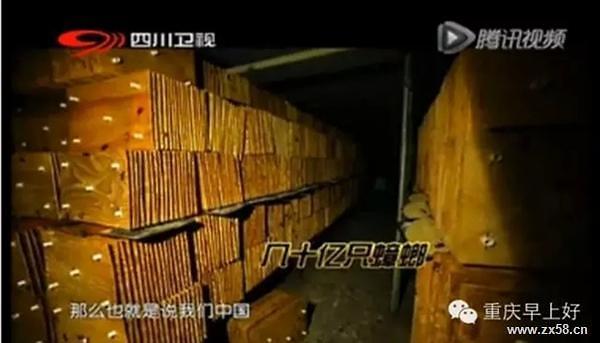 [중국포토] 60억 바퀴벌레 키우는 쓰촨공장, 지진이라도 나면…