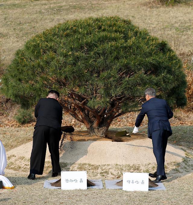 朝鲜:植树所用土壤来之不易 每一锹都凝聚心血
