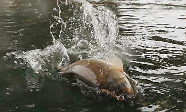 [포토] 물고기만 통행 가능