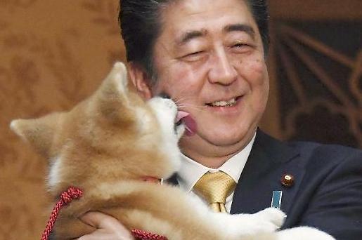 [포토] 사랑받는 아베 총리