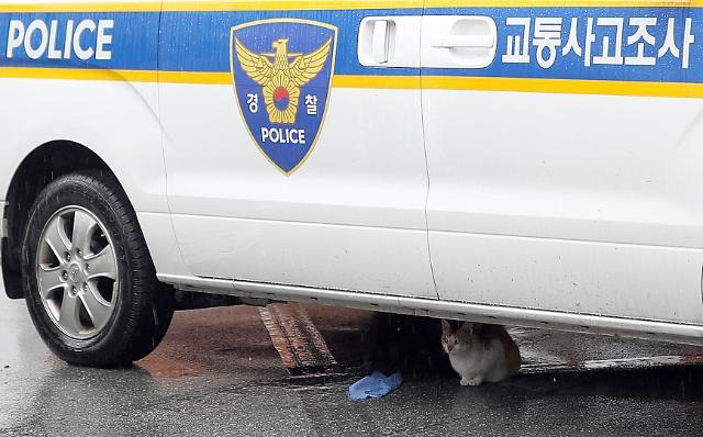 韩国进入梅雨季 喵星人躲警察车下躲雨萌爆!