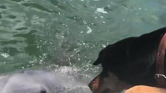 종을 초월한 우정…돌고래와 멍멍이의 만남