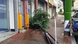 """.台风""""苏力""""走啦! 韩国大部分地区解除警报."""