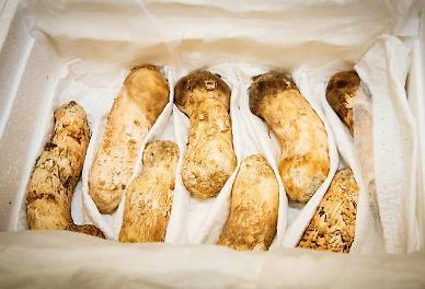 .[SUMMIT] N. Korea sends pine mushrooms as special gift for Moon .