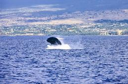 .State auditors demand safety management of whale meat.