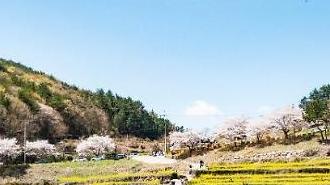 [잘가 여행지-봄]봄에는 유채꽃이, 가을에는 메밀꽃이 장관을 이루는 두모마을