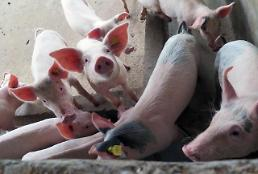 .African swine fever outbreak in China can cause global protein crisis: expert.