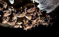 박쥐·쥐 등 야생동물 수입 검역 강화된다...코로나19 등 인수공통감염병 유입 차단