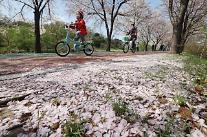 [포토] 안녕 벚꽃