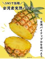 일본, 대만 파인애플 팔아주기 열풍…산케이 직접 홍보도