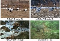 민간인 통제선 이북지역에 멸종위기종 44종 서식