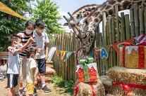 매년 하지는 '세계 기린의 날'...에버랜드, 고객들과 기린 보호활동