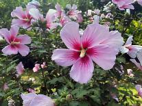 살랑이는 바람, 향긋한 꽃내음…화담숲 여름꽃 전시회