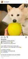 尹, 전두환 '송구하다더니…개에 사과 주는 사진 올려 논란